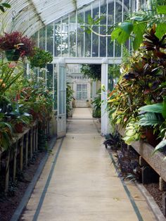 Palm House, Belfast, Northern Ireland - 7th February 2012