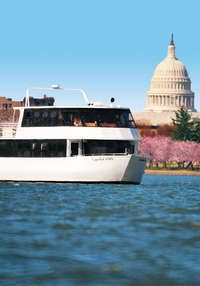 Cherry Blossom Sightseeing Cruise: Elite Private Yachts