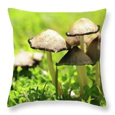 Spring mushrooms by Yarinka Morozova  A touching family of mushrooms lit by the May sun on a green grass #Yarinka  MorozovaFeineArtPhotography#ArtForHome#  home decor#Pillow # mushrooms # tea # green