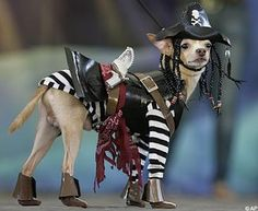 Pirate Puppy! Ha ha ha ha