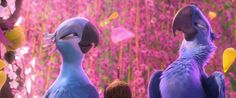 Looking for fun movies to watch at your next movie night? Check out our 20 best animated movie list for new ideas! Rio Movie, Your Next Movie, Blue Sky Studios, Rio 2, Cartoon Photo, Blue Dream, Movie List, Movie Characters, Love Birds