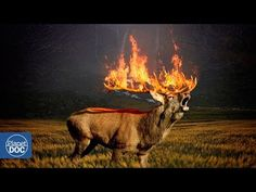 Forest, Hirsch Roe Deer Forest Brand Forest Fire F Free Pictures, Free Photos, Stag Wallpaper, Amazon Rainforest, Nature Images, Global Warming, Mother Earth, Conservation, Poster Prints