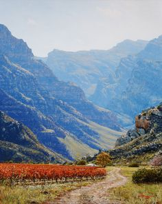 A selection of landscape paintings by South African landscape artist Andrew Cooper. River Painting, Forest Painting, Andrew Cooper, Dry River, Waterfall Paintings, South African Artists, Table Mountain, Mountain Paintings, My Land