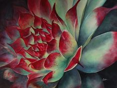 Marney-Rose Edge - Specializing in florals painted in watercolour, capturing the light. Floral Paintings, Paintings I Love, Colorful Paintings, Succulent Plants, Cacti, Succulents, Watercolor Plants, Watercolor Paintings, Southwestern Art