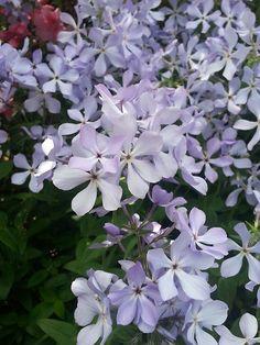 Spring Flower and Wedding Arrangements