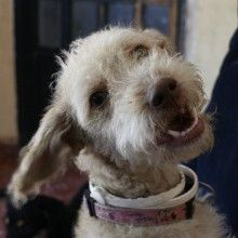 We search for forever families in the UK to adopt Spanish stray rescue dogs that have been rescued from the streets of Spain Stray Dog, Rescue Dogs, Spanish, Adoption, Shop, Animals, Foster Care Adoption, Animales, Animaux