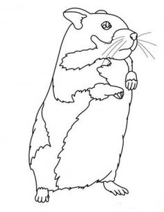 heres a coloring sheet of a hamster that you can download and print off for your