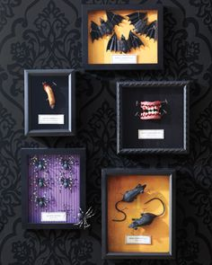 DIY Creepy Specimen Boxes - Black shadow boxes lined with Halloween craft paper feature a host of ghoulish specimens. You can find most specimens at the dollar store, secure with t-pins.