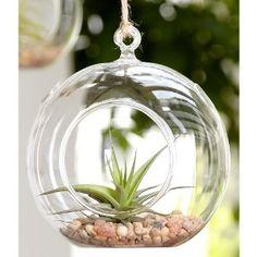 Airplant Terrarium Globe