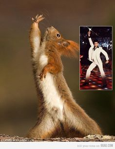 Squirrel Night Fever - actually, for K.  FUNNY GIRL.......:)