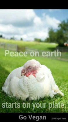 Go vegan. Stop the enslavement and torture of animals. Our pets aren't the only ones who need protection from abuse. G