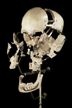 ExplodedHuman Skull by Ryan Matthew. Photo by Sergio Royzen.