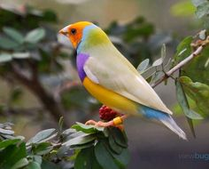 Multi Color Bird by Lauriann - Colorful Birds Photo Contest