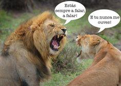 foto de leoes - Pesquisa Google
