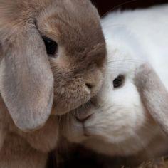 37 images d licieuses de lapin mignon bunny bunnies et cute bunny - Image de cochon mignon ...