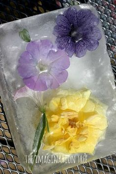 Freezing and defrosting science experiment for kids!
