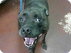 ACT QUICKLY OUT OF TIME PLEASE SHARE NOW  Atlanta, GA - Pit Bull Terrier. Meet KAREN, a dog for adoption. http://www.adoptapet.com/pet/16291491-atlanta-georgia-pit-bull-terrier