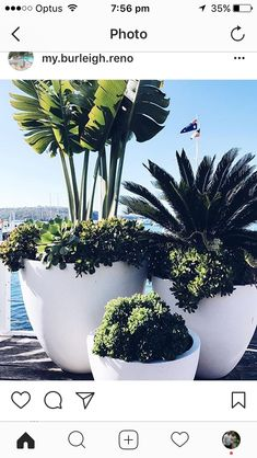 Easy Container Gardening Ideas for Your Potted Plants . The best part: You can plant anything in a planter as long as there's plenty of . Easy Container Gardening Ideas for Your Potted Plants . Outdoor Pots, Outdoor Gardens, Outdoor Potted Plants, Pots For Plants, Potted Palms, Large Outdoor Planters, White Planters, Indoor Outdoor, Garden Art