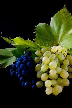 monomemo:  Grape (by letterberry)
