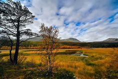 Rondane National Park, Norway (I think). Rustic colors contrast the blue sky. Perfection.