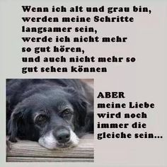 Streunerparadies added a new photo. All Dogs, I Love Dogs, Cute Dogs, Dog Qoutes, Dog Pictures, Funny Pictures, Animals And Pets, Cute Animals, Happy Love Quotes