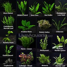 Aquarium Plant Pack - Ultimate