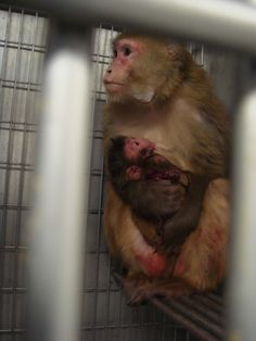13 Eye-Opening Images of Animals in Labs   Cruelty-Free Beauty & Cosmetics   Living   PETA