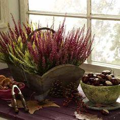 deco & style - Bildergalerie Blumen & Pflanzen - Bauer Living