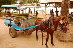 Horse and Carriage on Gili Island