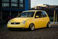 Clean yellow lupo