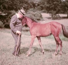 Churchill saving thousands of war horses from starvation and butchers after serving in a 4 year war