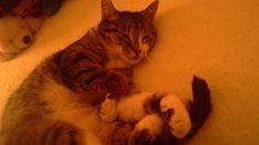 Omg look at my cat