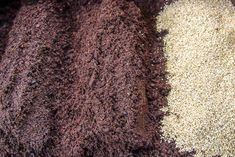 Seed compost is different from regular all purpose compost and having a blend that is right for seeds is ideal for getting them off to a good start.