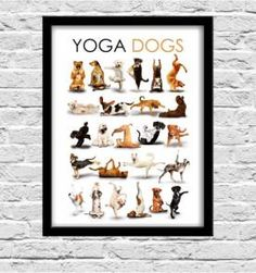 poster Yoga dogs  30x40cm