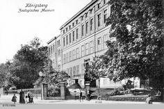 Königsberg, Zoologisches Museum