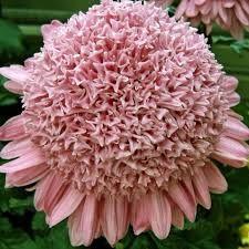 - My site Colorful Plants, Botany, Bellisima, Rose, Vegetables, Chrysanthemums, Secret Gardens, Outdoor Plants, Gardening