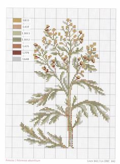 Artemisia absinthium, a.k.a. wormwood (This is the stuff traditionally used to flavor absinthe.)
