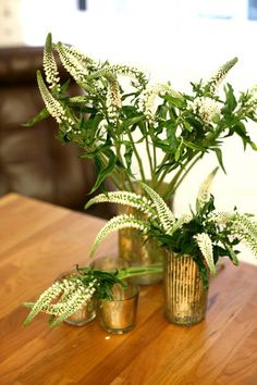 Veronica , flower option