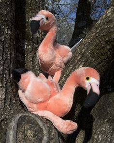 Now, here's a #Valentine gift that's got real heart. Our limited-time Flamingo Valentine's Day sponsorship includes two general admission tickets, two flamingo plushes, an animal fact sheet, photo and a full year of sponsorship for our Chilean flamingos.