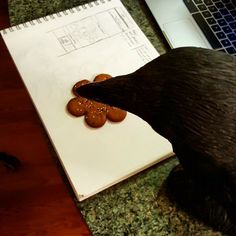 Lenore the Raven eating cookies and sketching web bits.