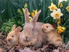 Rabbits!...Love it.....<3<3<3<3