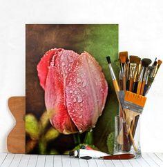 tulip macro raindrops detail texture colored vintage Landscape