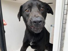 PetHarbor.com: Animal Shelter adopt a pet; dogs, cats, puppies, kittens! Humane Society, SPCA. Lost & Found. Why oh why do they force my face to be contorted, no comfort, no last meal, but I need out & I know I am not the prettiest dog you've ever seen.  Please pray for me, to be saved alive out of this prison.  Share for me, so I may possibly be rescued or adopted.  HARRIS COUNTY ANIMAL CONTROL IN HOUSTON, TX.