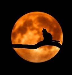 """Good Night Quotes and Good Night Images Good night blessings """"Good night, good night! Parting is such sweet sorrow, that I shall say good night till it is tomorrow."""" Amazing Good Night Love Quotes & Sayings Chat Halloween, Halloween Bride, Halloween Music, Samhain Halloween, Halloween Clothes, Halloween Items, Halloween 2015, Halloween Night, Spirit Halloween"""