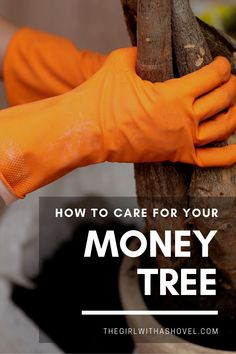 Money trees are a symbol of prosperity and bring good luck into your home. Make sure to keep your money tree alive and well with these money tree plant care tips! #moneytree #houseplantslover House Plants Decor, Plant Decor, Money Tree Plant Care, Crescent Recipes, All About Plants, Apartment Plants, Plant Aesthetic, Plant Guide, Best Indoor Plants