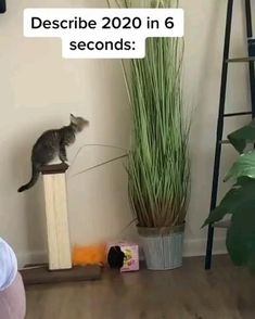 Funny Cute Cats, Cute Funny Animals, Cute Baby Animals, Cool Cats, Funny Animal Videos, Animal Memes, Kittens Cutest, Cats And Kittens, Cat Plants