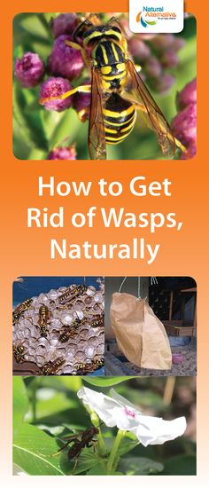 How To Get Rid Of Wasps In Roof Vents Products I Love