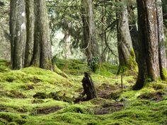 Bosque Magico -Santa Elena- Colombia