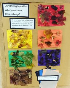 Inquiring Minds: Mrs. Myers' Kindergarten: Investigating the Colors of Leaves Inquiring Minds: Mrs. Myers' Kindergarten: Investigating the Colors of Leaves Kindergarten Inquiry, Inquiry Based Learning, Preschool Science, Project Based Learning, Kindergarten Classroom, Preschool Fall Theme, Reggio Classroom, Kindergarten Projects, Life Science