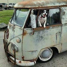 Vw bus dog ride